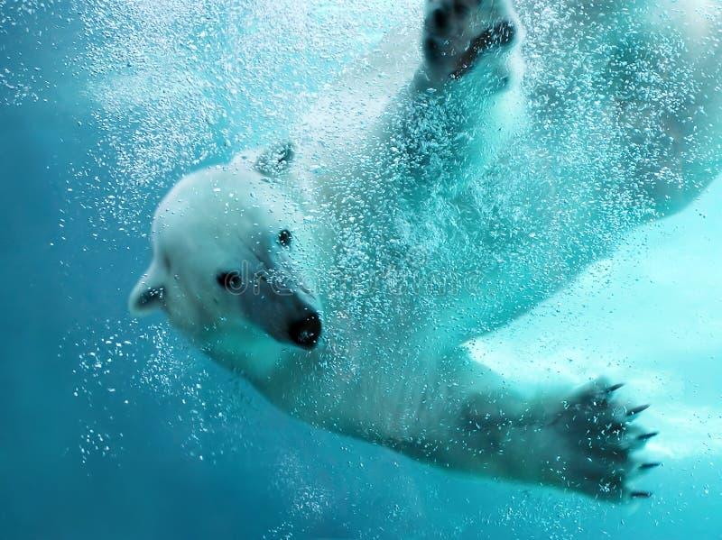 Ijsbeer onderwateraanval stock afbeeldingen