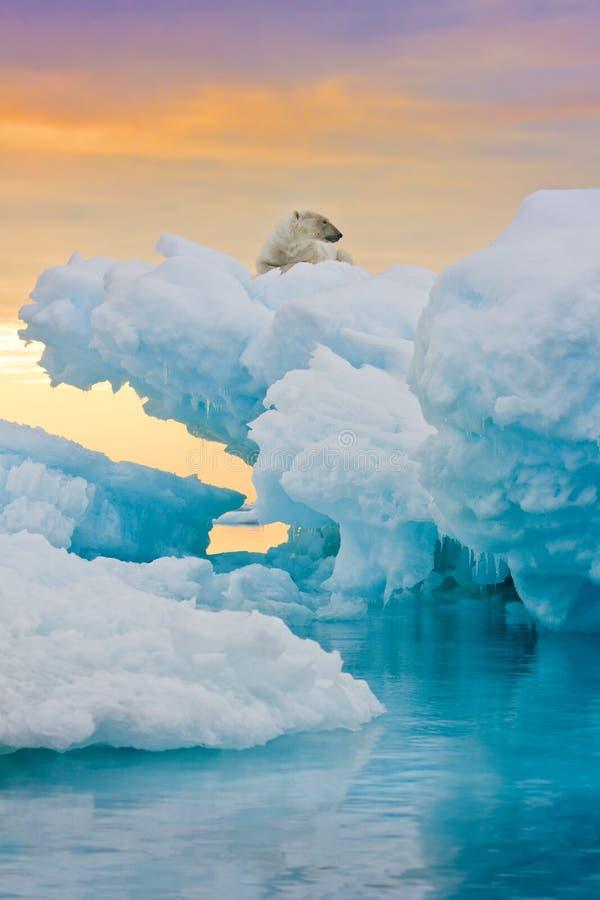 Ijsbeer op Bevroren Dagzomende aardlaag stock foto