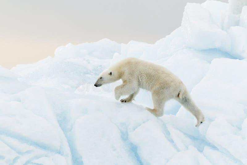Ijsbeer op ijsberg royalty-vrije stock afbeeldingen