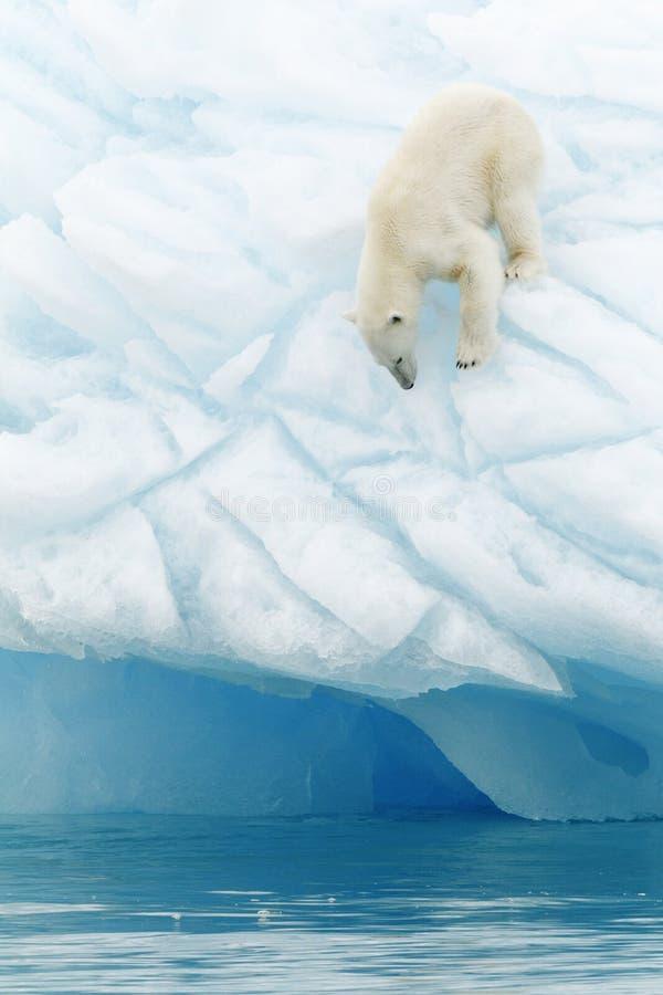 Ijsbeer op ijsberg stock foto