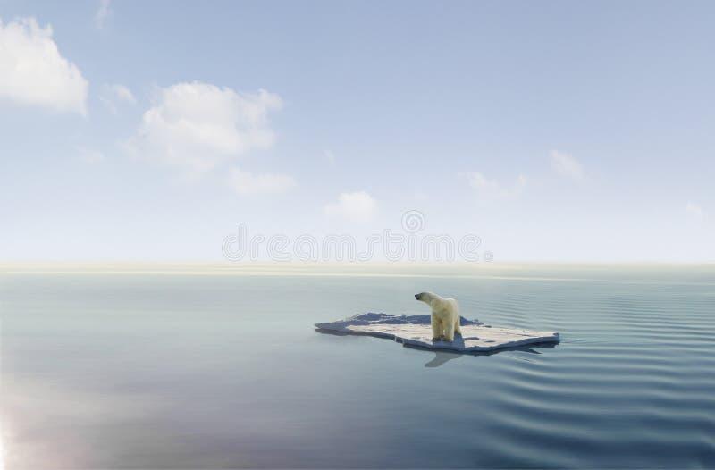 Ijsbeer op ijsijsschol stock foto