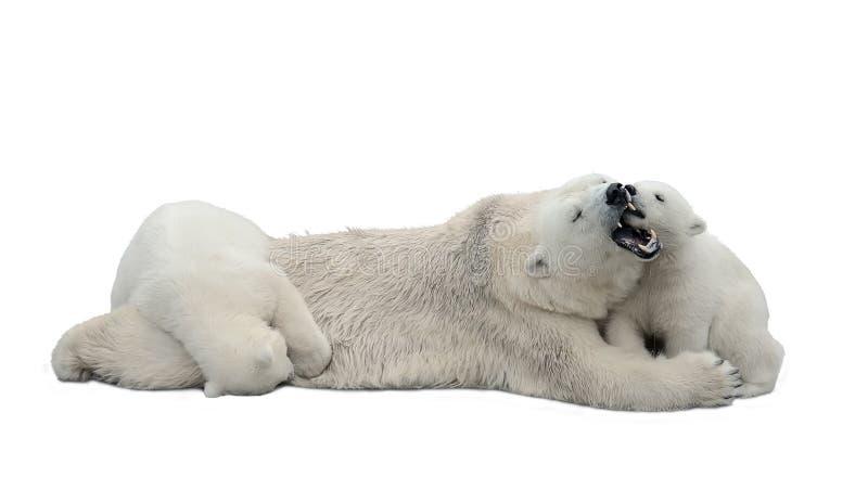 Ijsberen die op witte achtergrond worden geïsoleerdR royalty-vrije stock fotografie