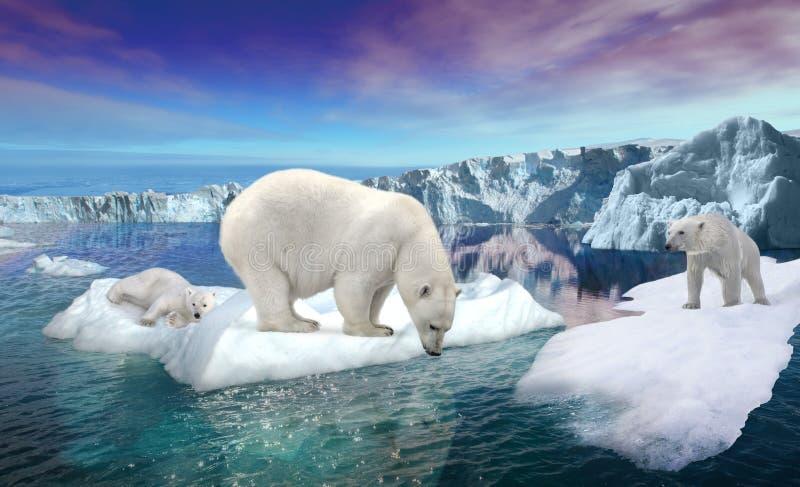 Ijsberen op dun ijs royalty-vrije stock afbeeldingen