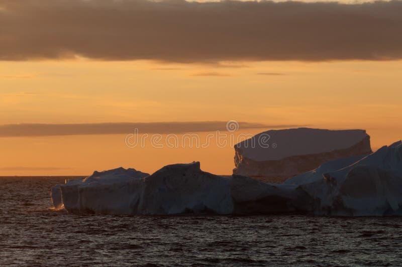 Ijsbergen in het avond licht royalty-vrije stock foto's
