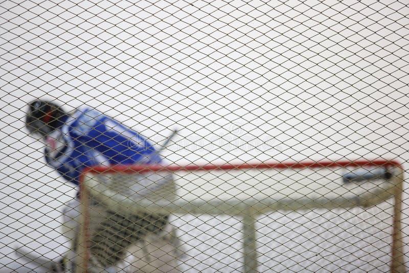 Ijshockeykeeper in de poorten royalty-vrije stock foto's