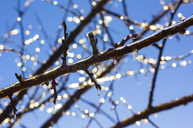Ijskegels op Takken op Blauwe hemel op zonnige de winterdag royalty-vrije stock foto's