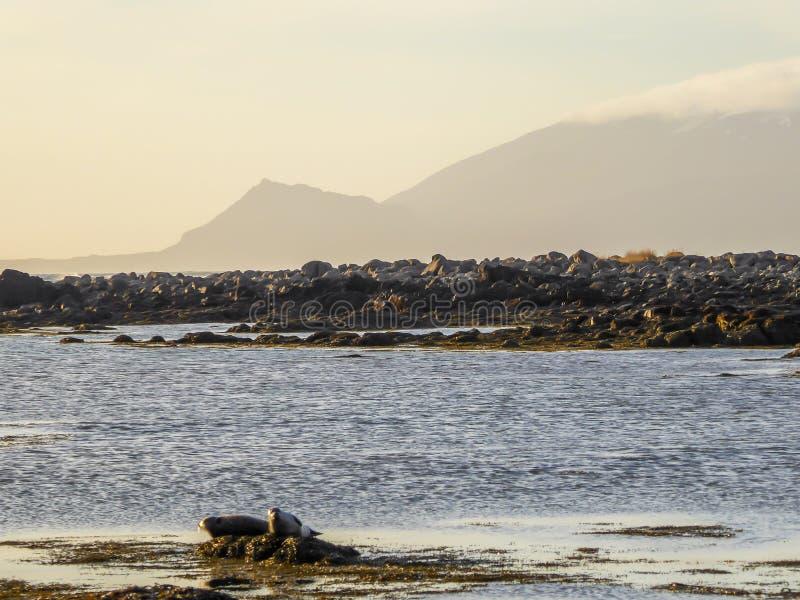 IJsland - Verbindingen die naast de kust spelen royalty-vrije stock fotografie