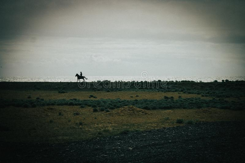 Ijslandse horseback ruiter op zwart zandstrand stock fotografie