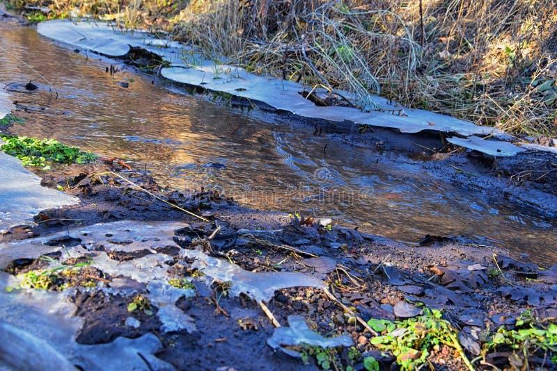 IJsplankvorming in bossen die stromen rond steen, modder en flora met mos op de winterochtend in de Rocky Mountains in de buurt v royalty-vrije stock fotografie