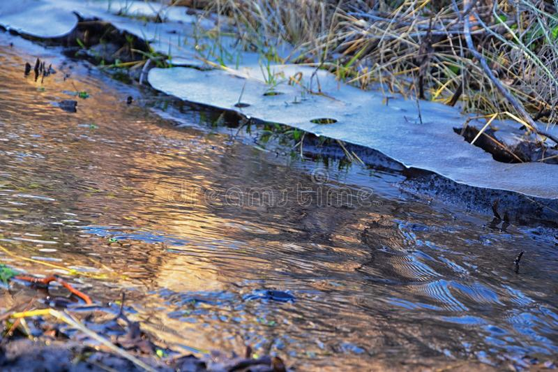 IJsplankvorming in bossen die stromen rond steen, modder en flora met mos op de winterochtend in de Rocky Mountains in de buurt v royalty-vrije stock foto's