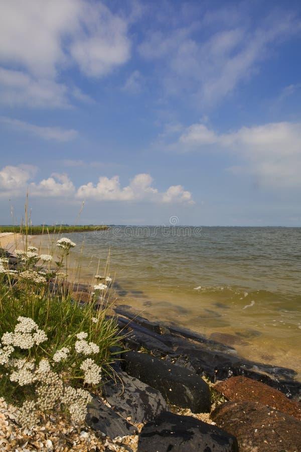 IJsselmeer Nederland, IJsselmeer Нидерланды стоковое фото rf