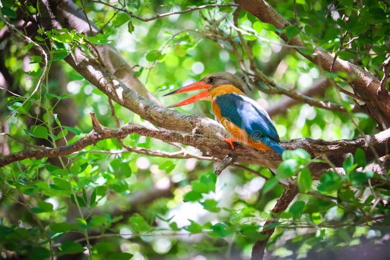 Ijsvogel op de tak royalty-vrije stock fotografie