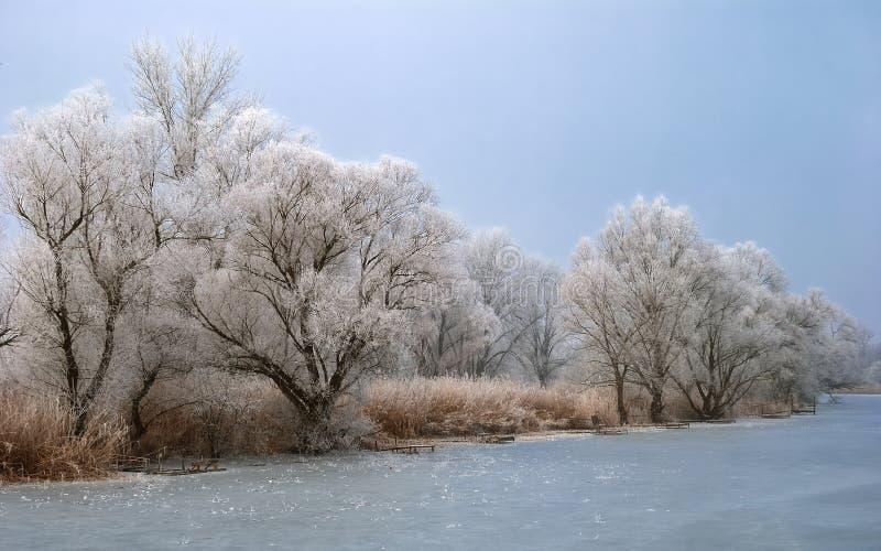 Ijzig binnenwater met bomen stock fotografie