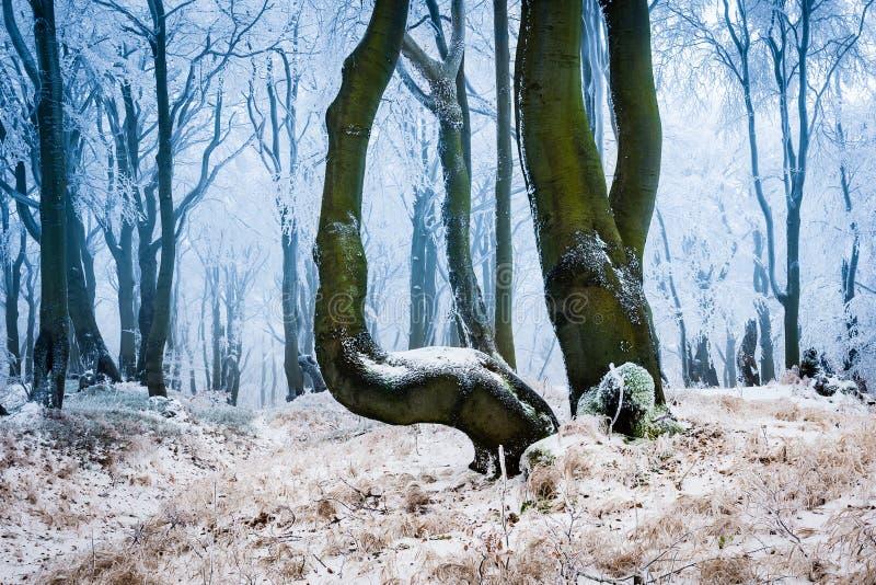 Ijzig bos in de winter stock foto