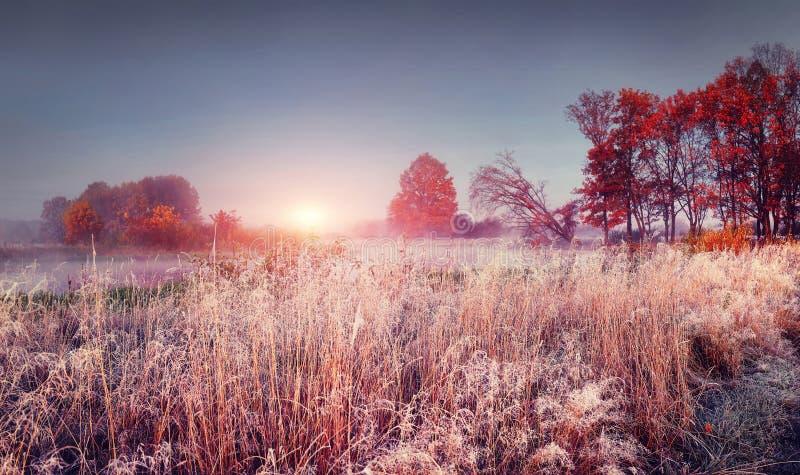 Ijzig de herfstlandschap van november-aard bij zonsopgang De landschaps kleurrijke herfst met rijp stock afbeeldingen