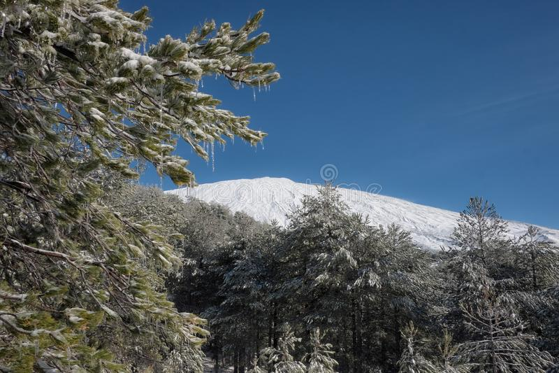 Ijzig Dennenbos en Etna Mount, Sicilië stock afbeeldingen