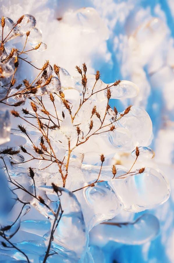 Ijzig glinsterend gras in een de winteropen plek royalty-vrije stock foto