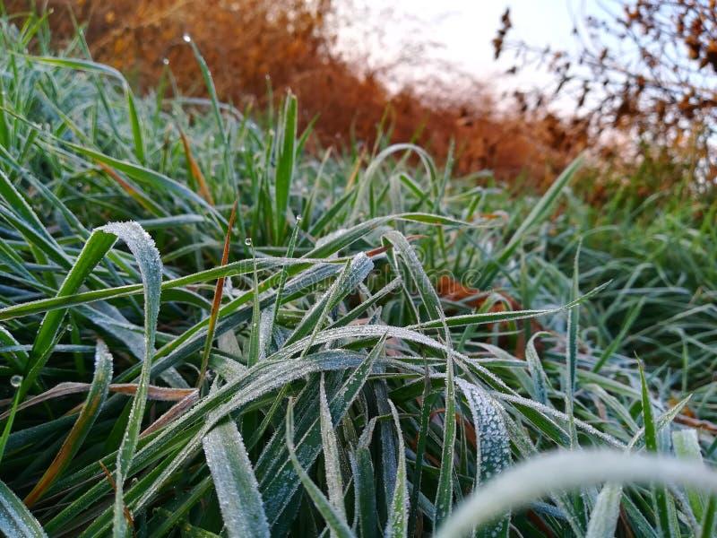 Ijzig groen gras met dauw bij ochtend stock foto's