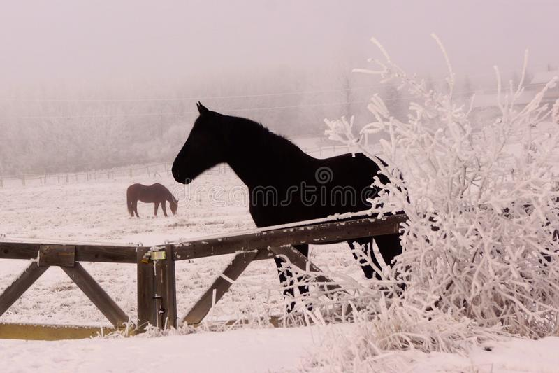 Ijzig paard in de winter stock foto