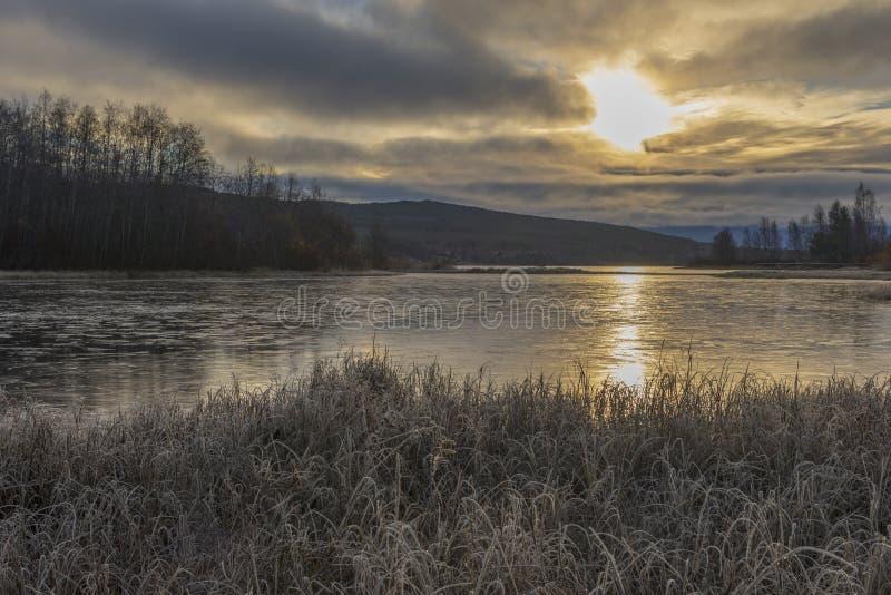 Ijzig riet in voorgrond en eerste ijs op water stock fotografie