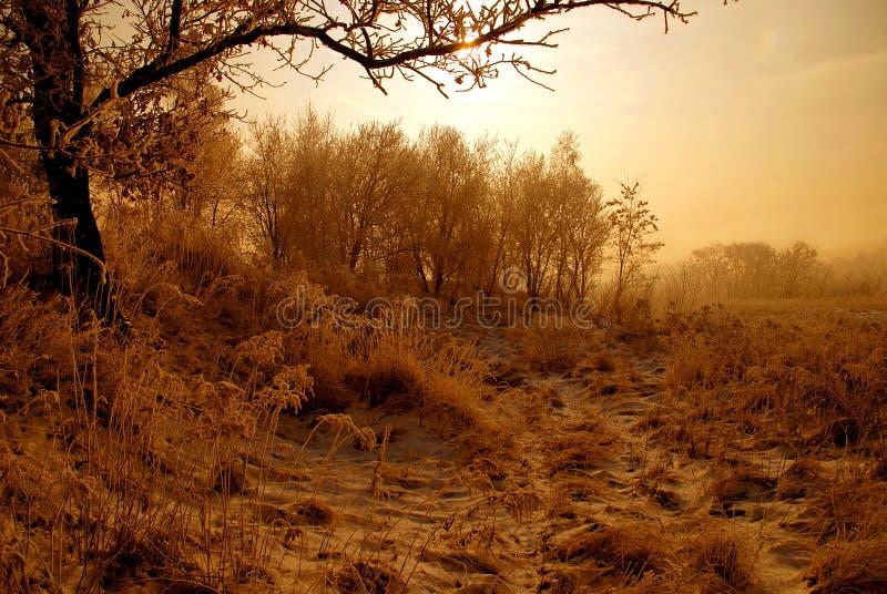 Ijzig wit de winterlandschap stock afbeeldingen