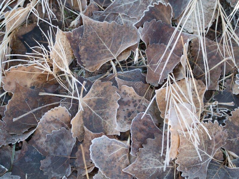 Ijzige bladeren stock afbeeldingen