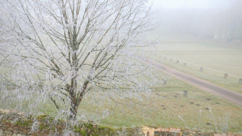 Ijzige ochtend in landelijk Frans platteland stock afbeeldingen