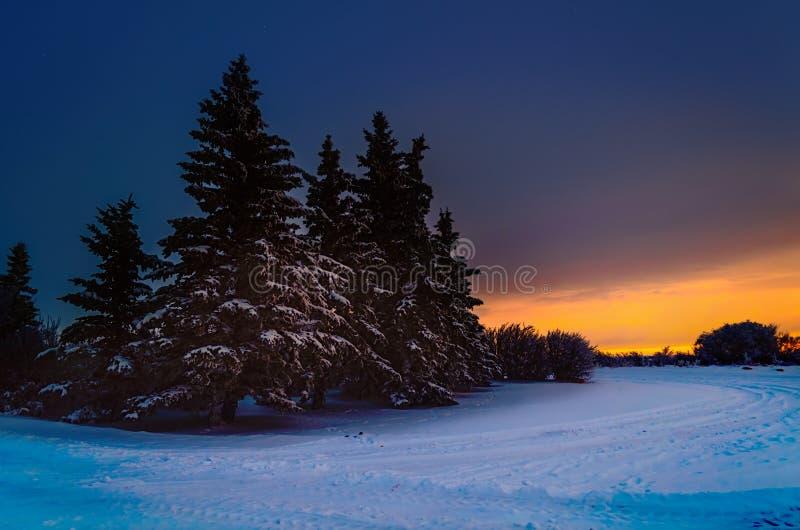 Ijzige, sneeuwnacht met een purpere hemel, Kerstboom bij nacht stock foto