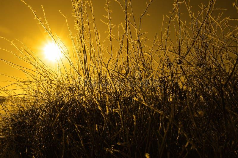 Ijzige takjes en takken in oranje zonsondergang stock afbeeldingen