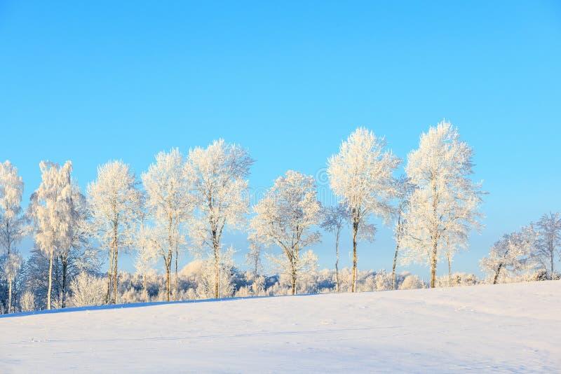 Ijzige treeline in de winterlandschap royalty-vrije stock foto's