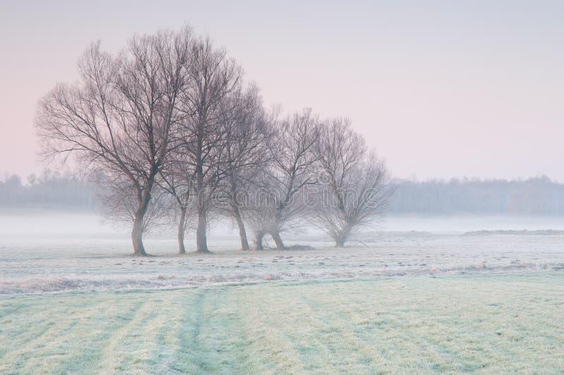 Ijzige vroege ochtend over een nevelige weide met eenzame groep bomen stock afbeelding