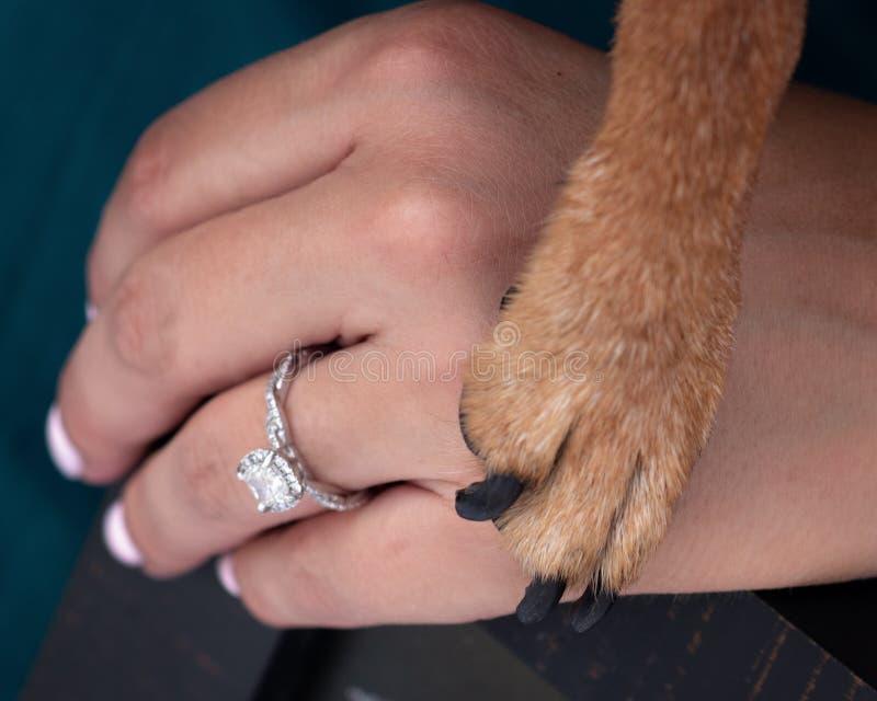 Ik hield van haar eerste, hond en eigenaar royalty-vrije stock foto