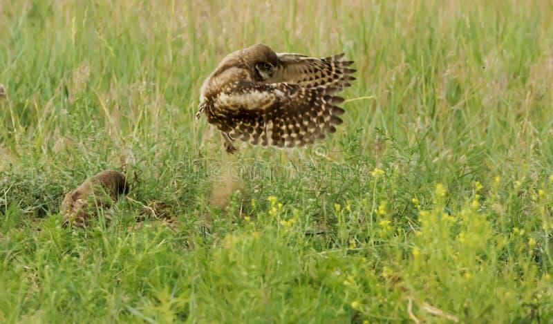 Ik kan vliegen, kan ik vliegen!! stock foto