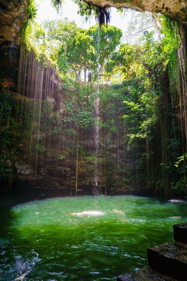 Ik-Kil cenote nära Chichen Itza, Mexico Cenote med genomskinligt vatten och att hänga rotar royaltyfria bilder