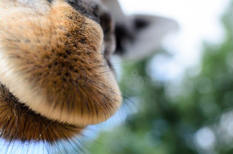 Ik ruik u zei de giraf royalty-vrije stock foto