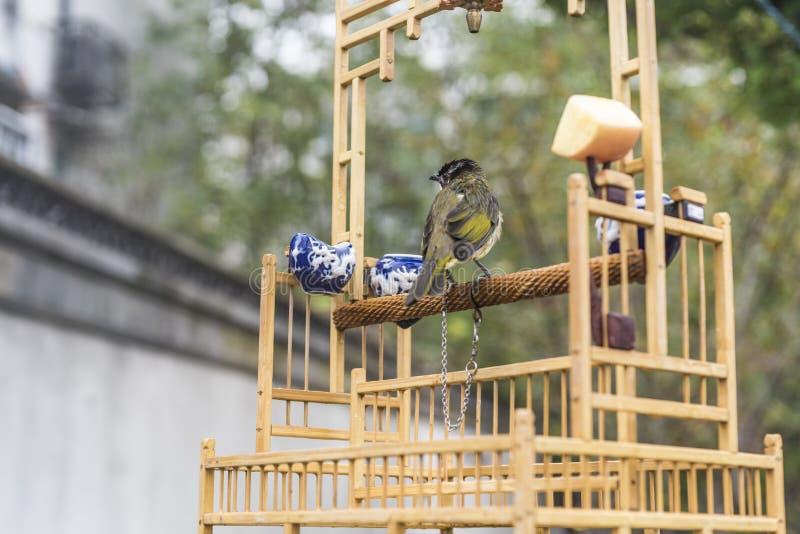Ik wil vrij zijn Een vogel met een kabel op één been ziet vooruit eruit stock afbeeldingen
