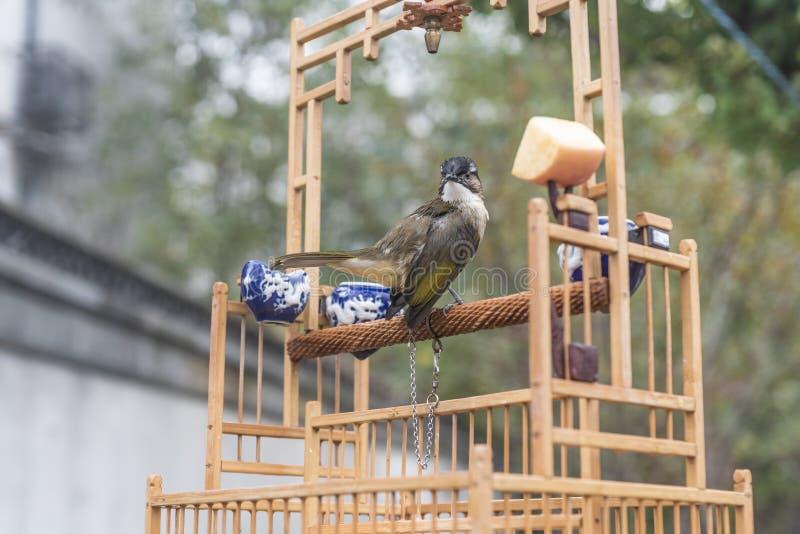 Ik wil vrij zijn Een vogel met een kabel op één been ziet vooruit eruit royalty-vrije stock fotografie