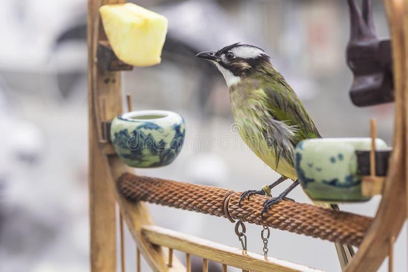 Ik wil vrij zijn Een vogel met een kabel op één been ziet vooruit eruit stock fotografie