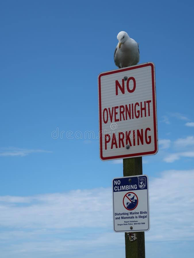 Ik zal parkeren waar ik aan wil stock foto's