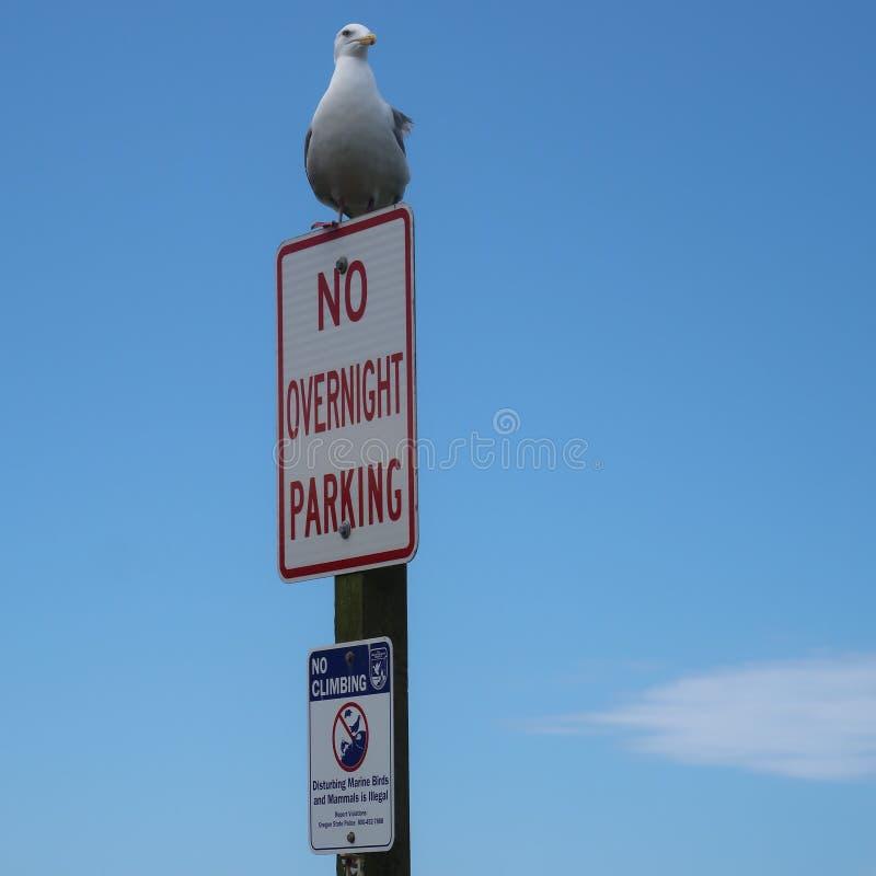 Ik zal parkeren waar ik aan wil stock afbeeldingen