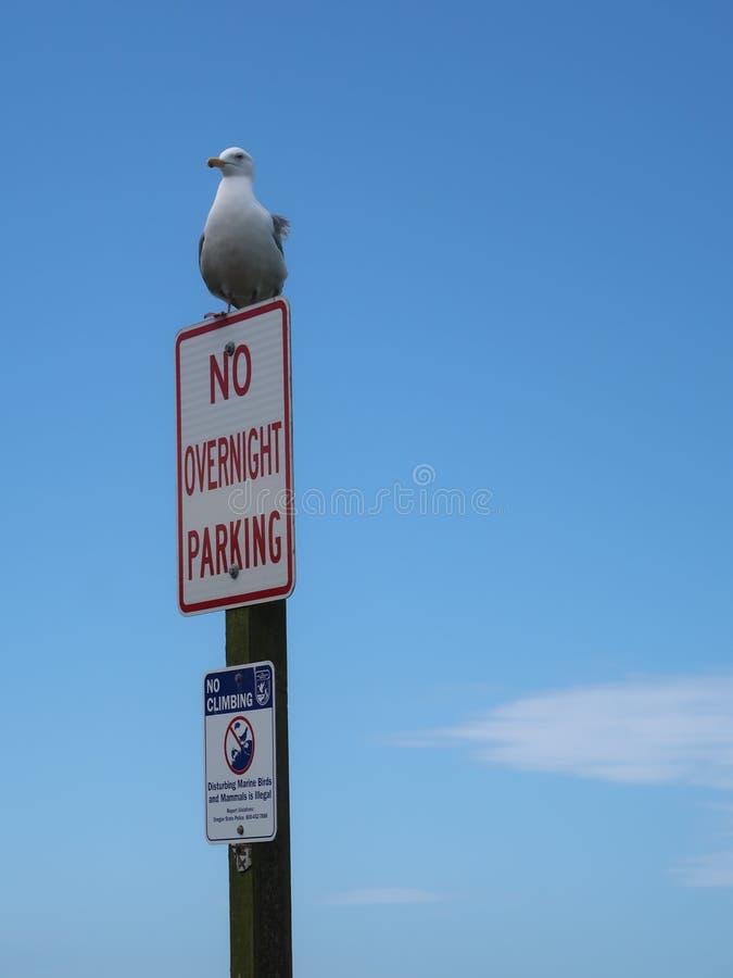 Ik zal parkeren waar ik aan wil stock fotografie