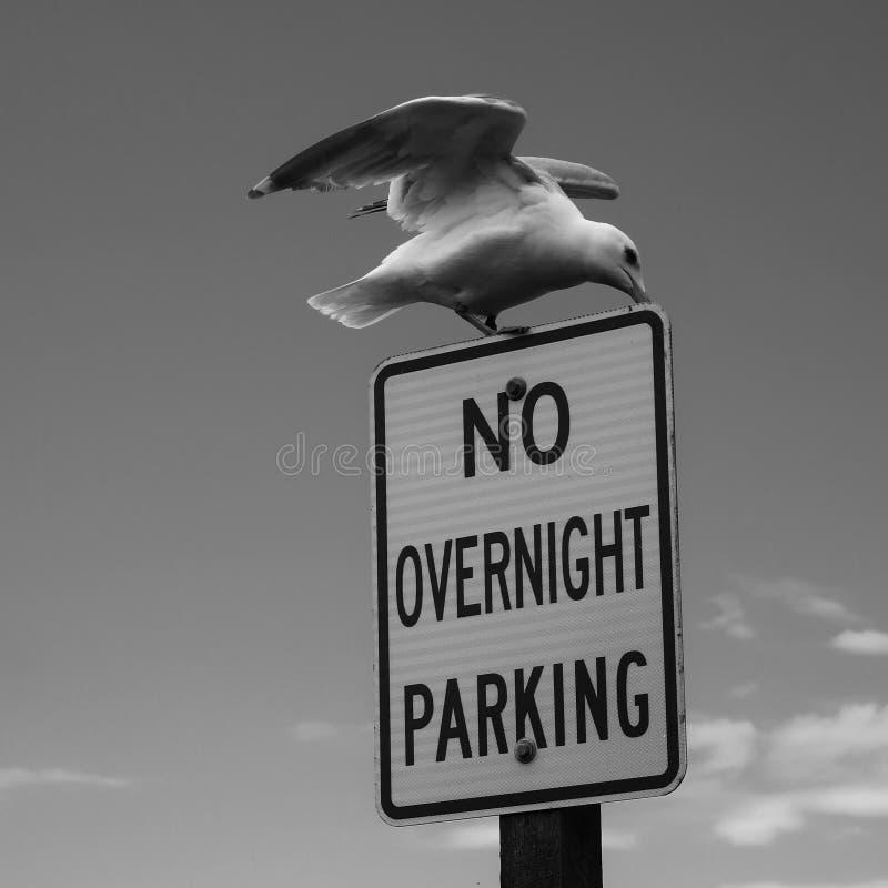 Ik zal parkeren waar ik aan wil royalty-vrije stock foto