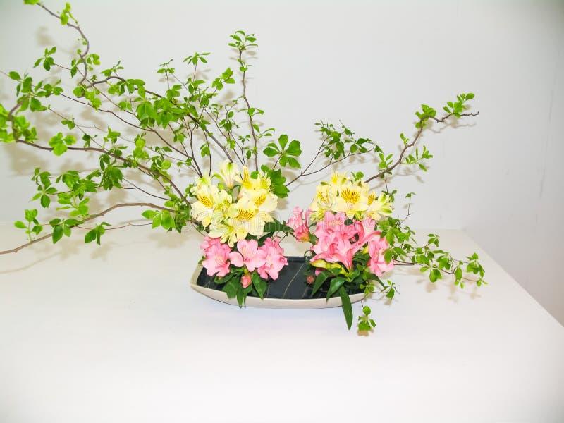 Ikebana Arbres nains dans des pots photo libre de droits