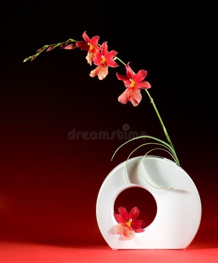 Ikebana Auslegung stockbild