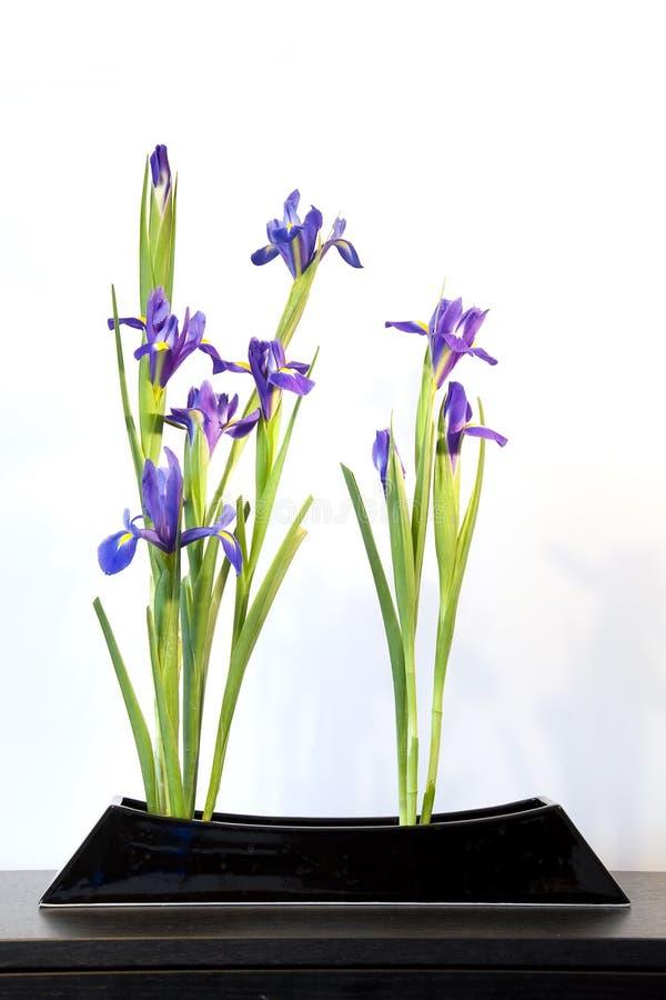 Ikebana com íris azuis, arranjo da mola de flor japonês fotos de stock royalty free
