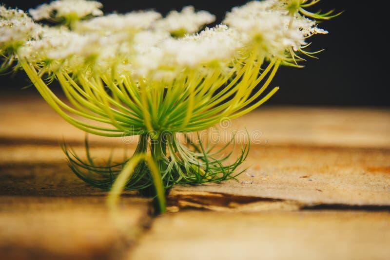 Ikebana Een boeket van witte wildflowers in een stapel van houten bars op een zwarte achtergrond stilleven van bloemen en hout Sl royalty-vrije stock foto