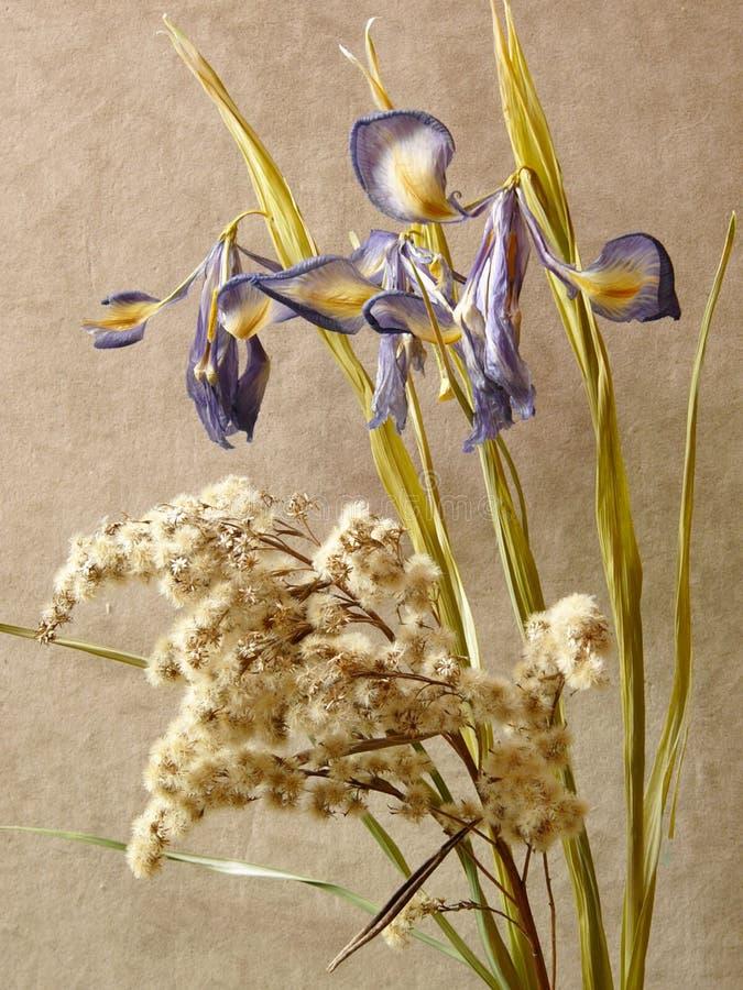 Ikebana mit Blenden stockbilder