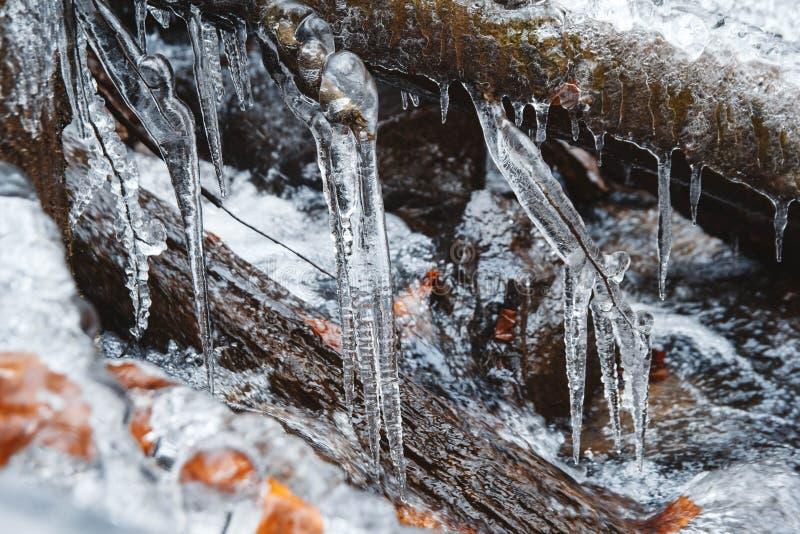 Ikles na gałęzi na tle rzeki górskiej Miasta w zimie Scena mrozów Miejsce na tekst lub reklamę fotografia stock