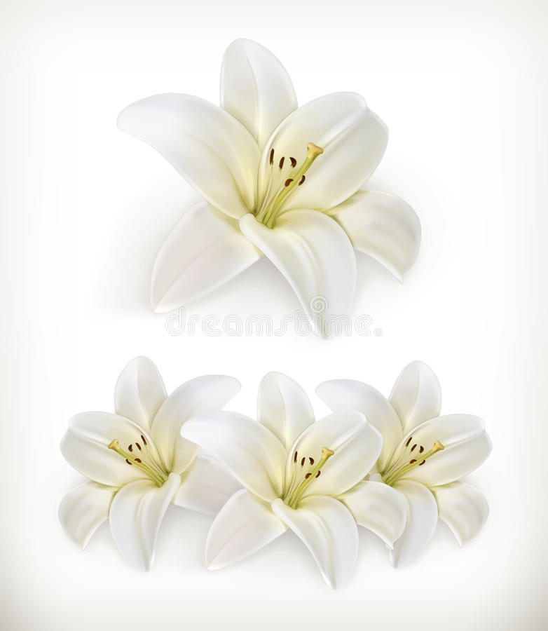 Ikonen der weißen Lilie lizenzfreie abbildung