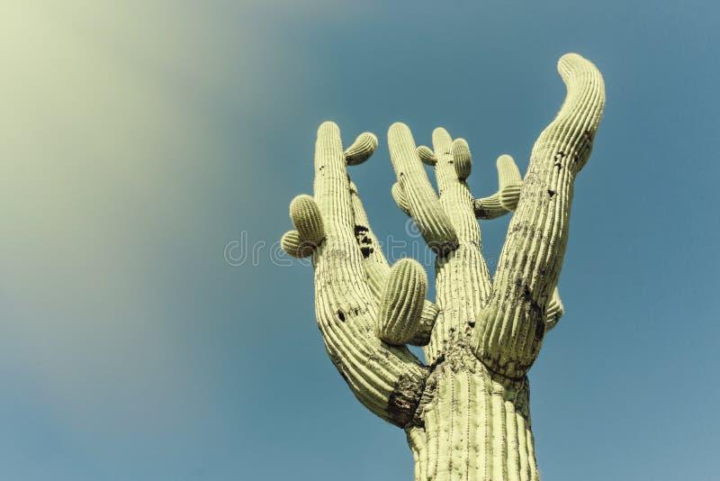 Ikonenhafter Saguaro-Kaktus-Baum Bildkreuz aufbereitet stockfotografie